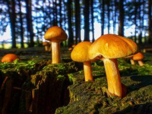 Baum-Pilze II