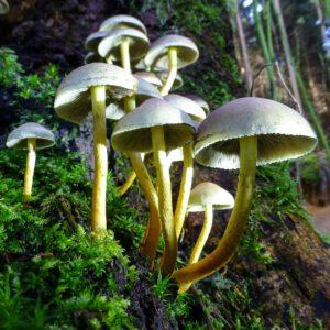 Baum-Pilze